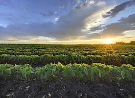 Bayer Closes Monsanto Acquisition