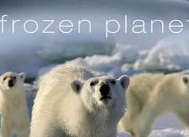 Frozen Planet Lesson