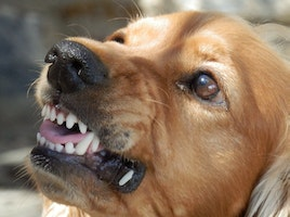 Help for Anxious Dogs: What to Do at Home