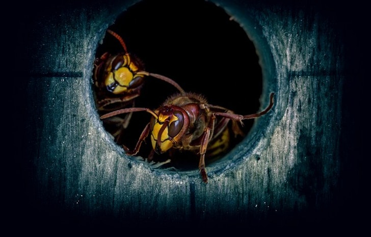 3 of the Most Popular Kinds of Wasps