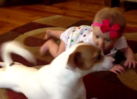 This Puppy Giving a Baby a Crawling Lesson Is the Most Adorable Thing You'll See Today