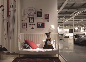 IKEA Has Found a Genius Way to Encourage People to Adopt Homeless Dogs