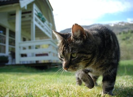 Tips to Make Your Outdoor Cat Safer