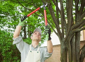 There Is an Arborist in Edmonton for Your Tree Care Needs