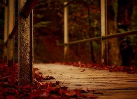 The Autumn Chill~