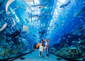 15 Fun Things to do in Dubai
