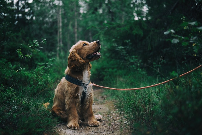 3 Tips for Choosing the Best Gear for Your Dog
