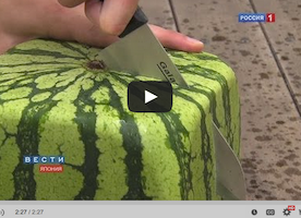 Square Watermelons Take Japan By Storm
