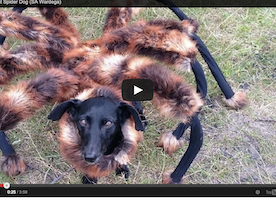 Pranksters Dressed A Dog Up As A Giant Spider To Scare People In Poland