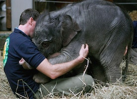 25 Heartwarming Times When Really Big Animals Gave Really Big Hugs