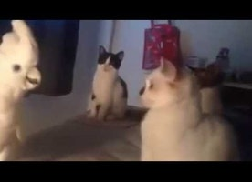 Parrot trolling kittens by making cat sounds
