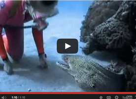 This Woman Has A Bizarre Encounter With An Eel That's Hard To Forget.