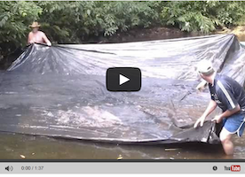 These People Use A Massive Tarp To Catch Fish Easier