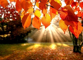 20 Reasons Why Autumn is the BEST.