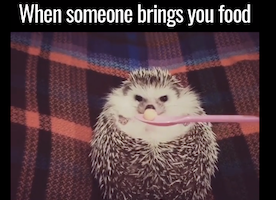 This Adorable Animal Perfectly Captures what All of us feel when someone brings us lunch.