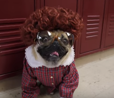 Have you seen Doug the Pug's Viral Video Spoofing Netflix's Stranger Things? I'm Obsessed.