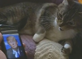 Pets who hate Donald Trump, they CANNOT.