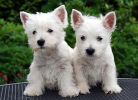 Puppiessssssss Right Now!