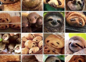 BEWARE: Do you see sloths or chocolate croissants when looking at this picture??