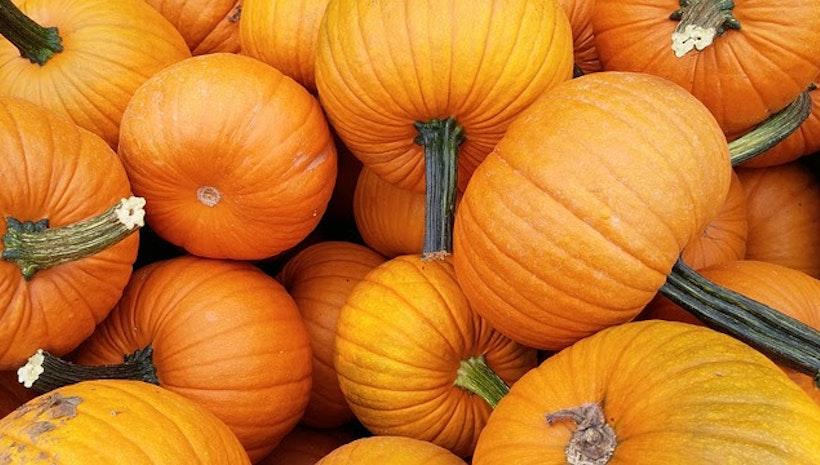Fall Festivals to Celebrate the Season