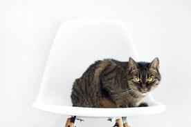 How to Manage a Copy-Cat Situation