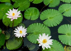 Gardening: Benefits Of Adding A Water Feature