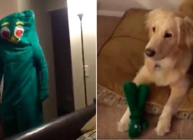 This Guy Dresssed Up Like His Dog's Favorite Chew Toy And  She Has the Sweetest Reaction