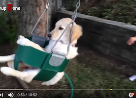 Because we could all use a cute puppy video today.