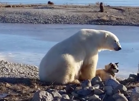 ADORABLE: Polar Bear petting a dog