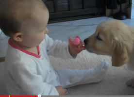 Baby and Puppy Meet for First Time