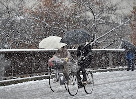 Tokyo has November snow for first time in 54 years