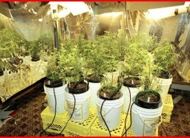 The Ultimate Way of Growing Cannabis Indoors