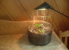 What is Grow Light Info?