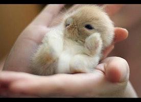 Baby Bunny Only Sleeps On His Back