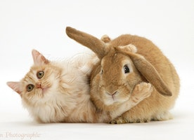 Best Food for Cats and Rabbits