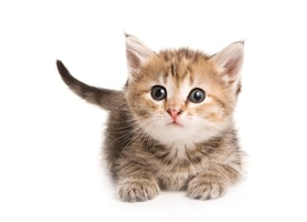 Replace every picture of Trump with kittens thanks to this life-saving Chrome extension - The Frisky