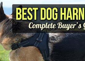 How to Choose the Best Dog Harnesses?