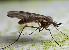 How To Save Your House Using A Gnat Control