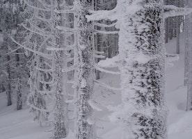 EPA To Alaskans In Sub-Zero Temps: Stop Burning Wood To Keep Warm