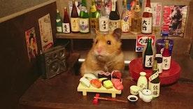 Hamster Bartenders Are the Best Bartenders