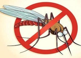 Home Remedies To Treat Malaria