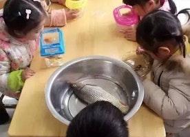 Teacher said: Bring a fish to kindergarten tomorrow