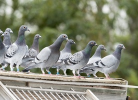 Terror of Pest Birds and Effective Bird Control Solutions