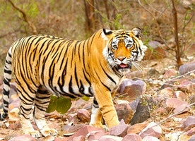 Why Tigers Are Not the Only Reason to Visit Ranthambore?