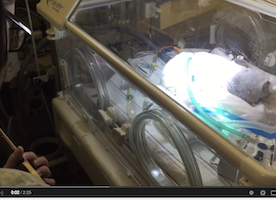 """Heart Breaking Video Of Father Singing """"Black Bird"""" To Comfort Dying Baby Son."""