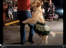 Can YOU Dance as Well as this Super Talented Dog?!