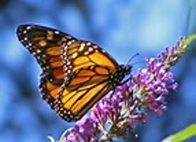The St. Clair Butterfly Foundation - Announcing New Board Member Position