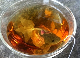 Goldfish Tea Bag – When cute little fishes are swimming in your cup