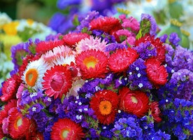 How Flowers are Beneficial in Our Lives