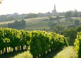 Bordeaux Wines: Best French Souvenirs [Infographic]